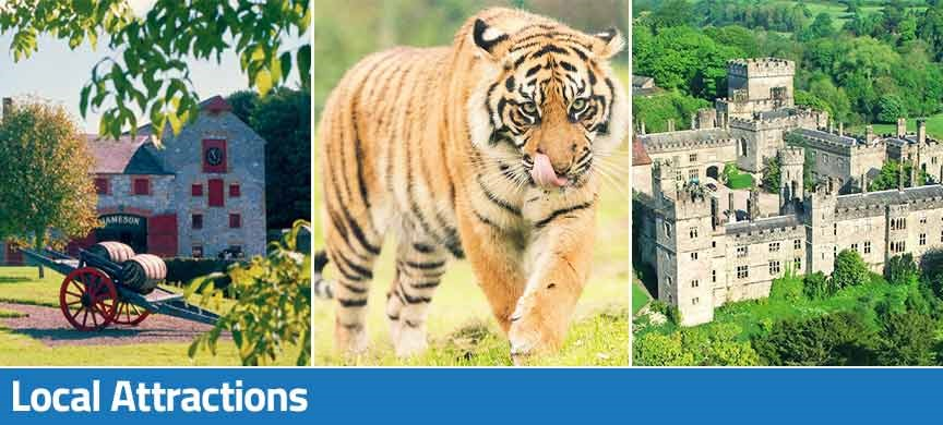 Jameson Distillery Midleton image, Tiger at Fota Wildlife Park and Castle in East Cork